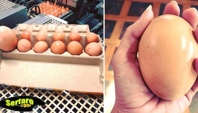 Αγρότης βρήκε γιγάντιο αυγό κάτω από τη κότα - Όταν το άνοιξε έγινε το απροσδόκητο