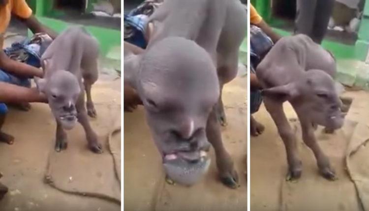 Σάλος στα Social Media με την κατσίκα που έχει ανθρώπινο πρόσωπο