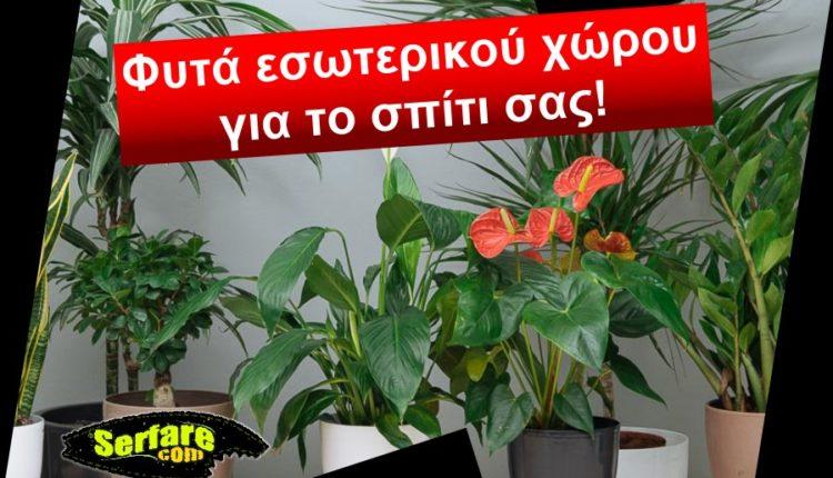 Φυτά εσωτερικού χώρου για το σπίτι σας!